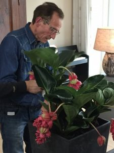 rob verlinden, robs grote tuinverbouwing, plantplezier