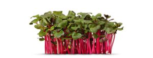 Koppert Cress is gespecialiseerd in 'Cressen'