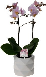 nieuwe website Little Kolibri Orchids